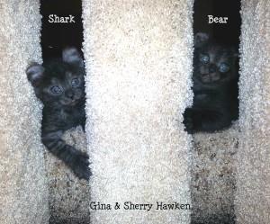 20150518_185911- Shark and Bear (left) edit1