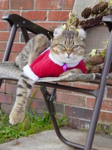 Highland Lynx at Christmas